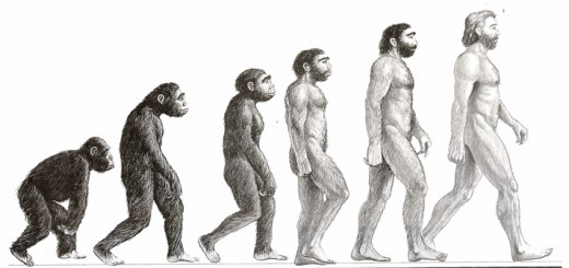 EVOLUTION PIC